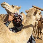Au marché aux chameaux - Harar -Ethiopie