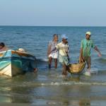 Déchargement de la pêche àTalai Mannar