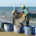 Retour de pêche à Tailai Mannar