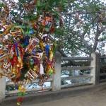 Arbre à souhaits à Trincomalee