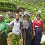 Avec les cueilluses de thé à Haputale
