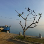 Départ pour l'île de Delf