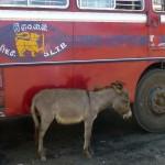 Attente de bus!