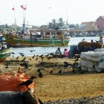 Port de pêche de Négombo
