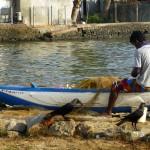 Au port de pêche de Négombo