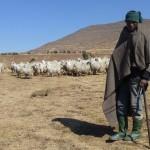 «Blanket» de Basotho sauce cagoule…