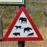 Attention: BIG FIVE!
