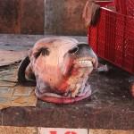 Un marché «tout bête»