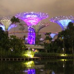 Gardens by the bay : violet !