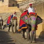 Les éléphants du fort d'Amber