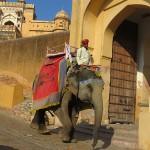 Eléphants parés et décoréss.