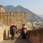 Montée des éléphants