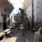 Dans une ruelle de Bikaner
