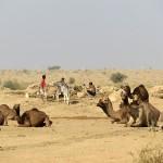 Dans le désert du Thar