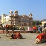 Jaipur et ses dromadaires