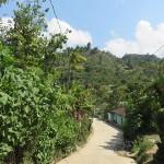 Végétation tropicale à Cotzal