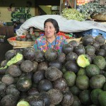 Avocats au marché d'Antigua