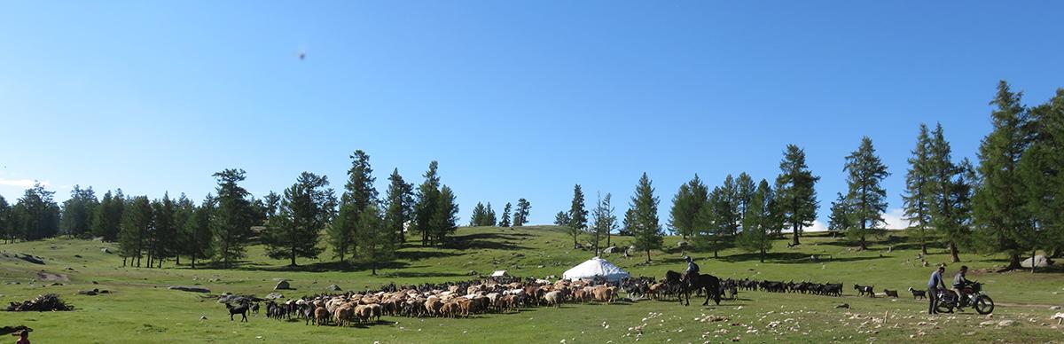 Le départ des troupeaux
