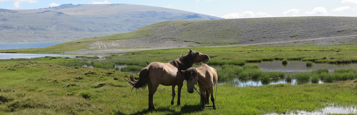 Caresses de chevaux sur fond de marécages!