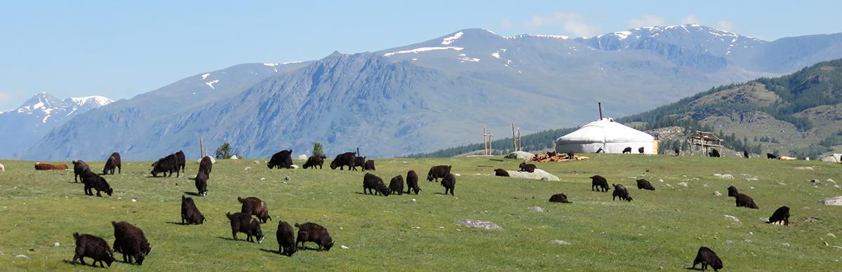 Paysage classique de l'Altaï mongol