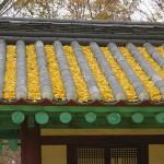 Les feuilles de Gingkos s'invitent sur les toits!Jeonju