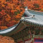 Temple sur fond d'érables.
