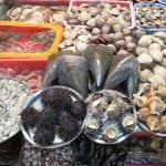 Moules géantes et autres coquillages