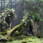 Nature fantastique!