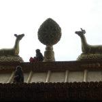 Temple aux singes