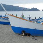 A chaque bateau son chien