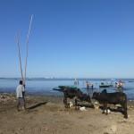 Le port des pirogues