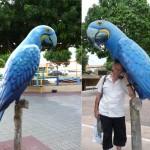 Alter de Chao - Amazonie - Brésil