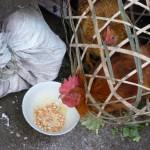 Au marché de Cao Bang - Vietnam -