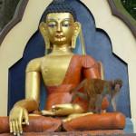 Singe et bouddha font bon ménage au Népal!