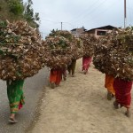 Porteuses à Dadelduhra - Népal
