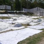 Etendage chez les Intouchables  à Haridwar - Inde