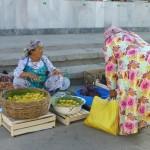 Choisir de bonnes figues - Samarkand