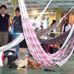 Poules à bord du Pachito