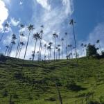 Cocora et ses palmiers de cire