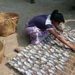 poisson birman séché et paté (4)