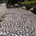 poisson birman séché et paté (5)