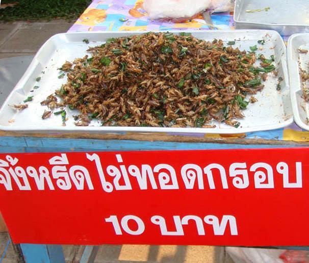 thailande insecte