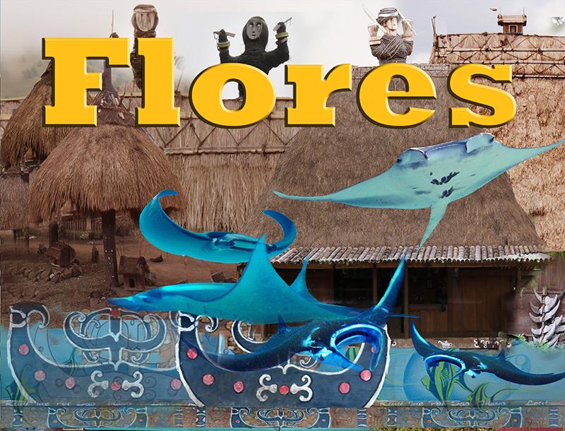 4Flores 1