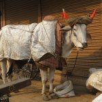 New Delhi - Inde