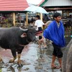 Pays Toraja