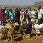 Aksum : des bêtes et des hommes