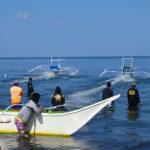 Régates de pêcheurs