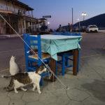 Chats grecs