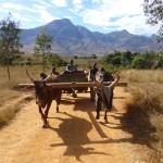 Trek dans l'Andringitra