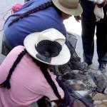 Achat de Cuy à Huaraz - Pérou